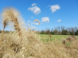 Wheat by undefinable101