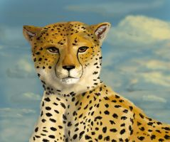 cheetah in the sun by Noctualis