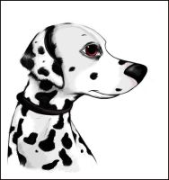 Dalmatian by Mitch-el