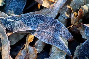 Cold Leaves 2 by swordedsaint