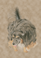 In memory of Mousy - my parents dog by JoannaOlsen