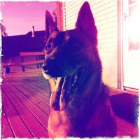 Zeus basks in the glowing sunset by iwonderbc