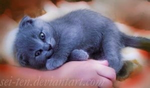 Blue cat by Sei-10