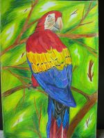 Scarlet Macaw by Ayanami-The-Nuff