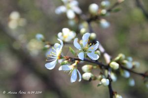 When spring arrives.. by MarinaPalme