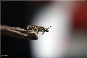 earth bee by mefisto0603