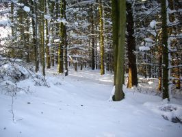 winter forest stock 6 by HumbleBeez