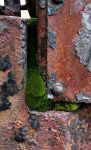 Moss on Metal by parrotdolphin