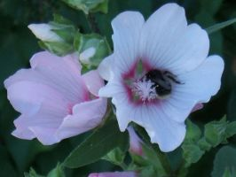 Flower with Bumble Bee by gwenna-stock