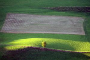 Tree in the field by northwulf