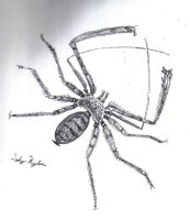 Whip spider by LadyKylin
