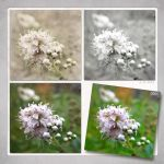Meadowsweet in Three Versions by Eijaite
