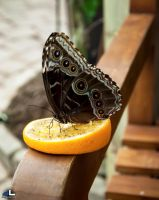 Butterfly Moments...enjoying by imonline