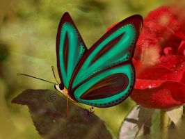 a Butterfly by KarlaTerry