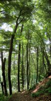 Primeval Beech Forests of the Carpathians by Maiyoko