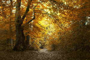 The path by cs4pro