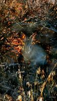 Rabbit  by gintautegitte69