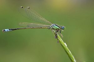 Dragonfly by misscreave