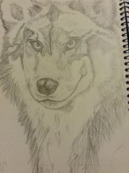 Wolf portrait in pencil by Megatronus11