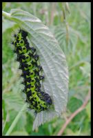 Good-looking caterpillar by Pildik