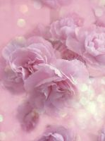 Carnations by LAPoetry-n-Photo