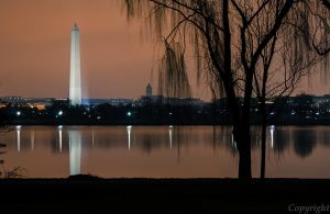 Washington Monument with Willow by Trbl2112