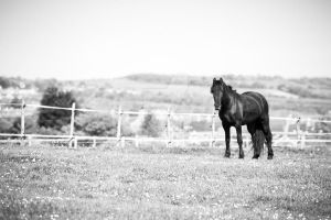 Horse in field by CryogenicCactus