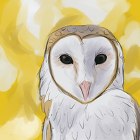 A Barn Owl by K-EAR-AH