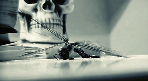 Dying Dragonfly by Quadraro
