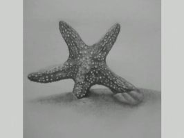 Sea Star by Skelvoi