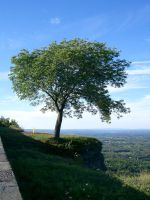 Tree on a Cliff2 by Nekoha-stock