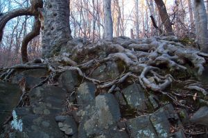 Exposed Roots by Lovely-LaceyAnn-Art