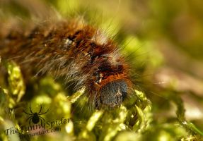 Fluffy Caterpillar on moss by TheFunnySpider