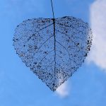 Leaf is in the air by nectar666