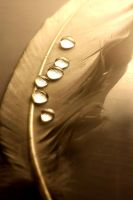Drops of a feather by linda-Bee