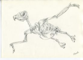 Eagle Skeleton by WentToTheMoonToday