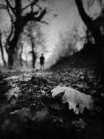 short tale of the black forest by Cestica