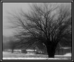 lonely tree by bgmsyn