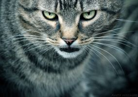 my cat by szuwar