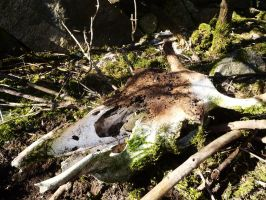 Cow scull by WolfyKaia