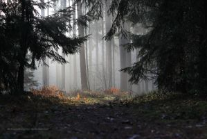 Morning forest by MichaelaPhotograpy