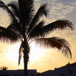 Miami - Palm Tree and Sunset by Infected-Beats