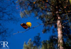 Herbst #5 by FloRi87