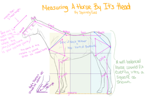 Measuring a Horse by its Head by SquirrelyTodd