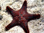 Starfish by xdeeplake