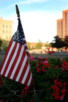 stars and stripes by 611productions