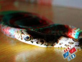 Snake Anaglyph II by redtailhawker