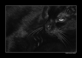 Black by grugster