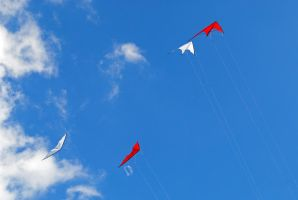 kites 1 by LucieG-Stock
