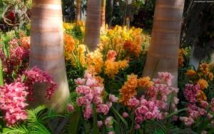 Orchids n Palms by StarwaltDesign